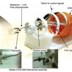 iTuna fish-like robot actuated by SMA muscles