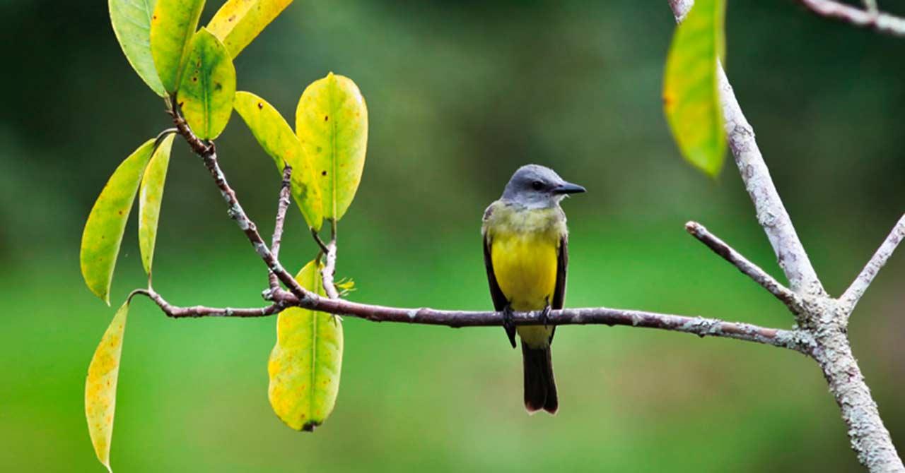 Investigaciones ambientales para una Colombia sostenible