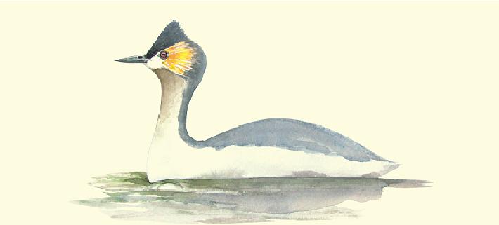 Aves en riesgo, una radiografía de Colombia