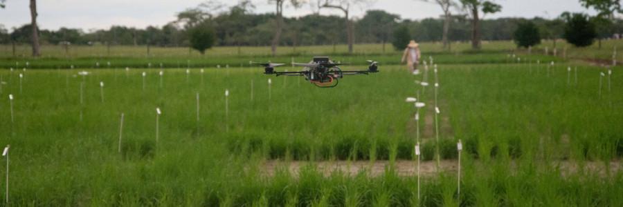 Tecnología de punta en el cultivo de arroz