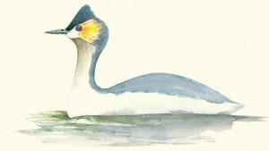 Ilustración: Robin H. Schiele.