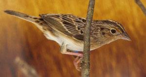 Las aves que Colombia perdió de vista