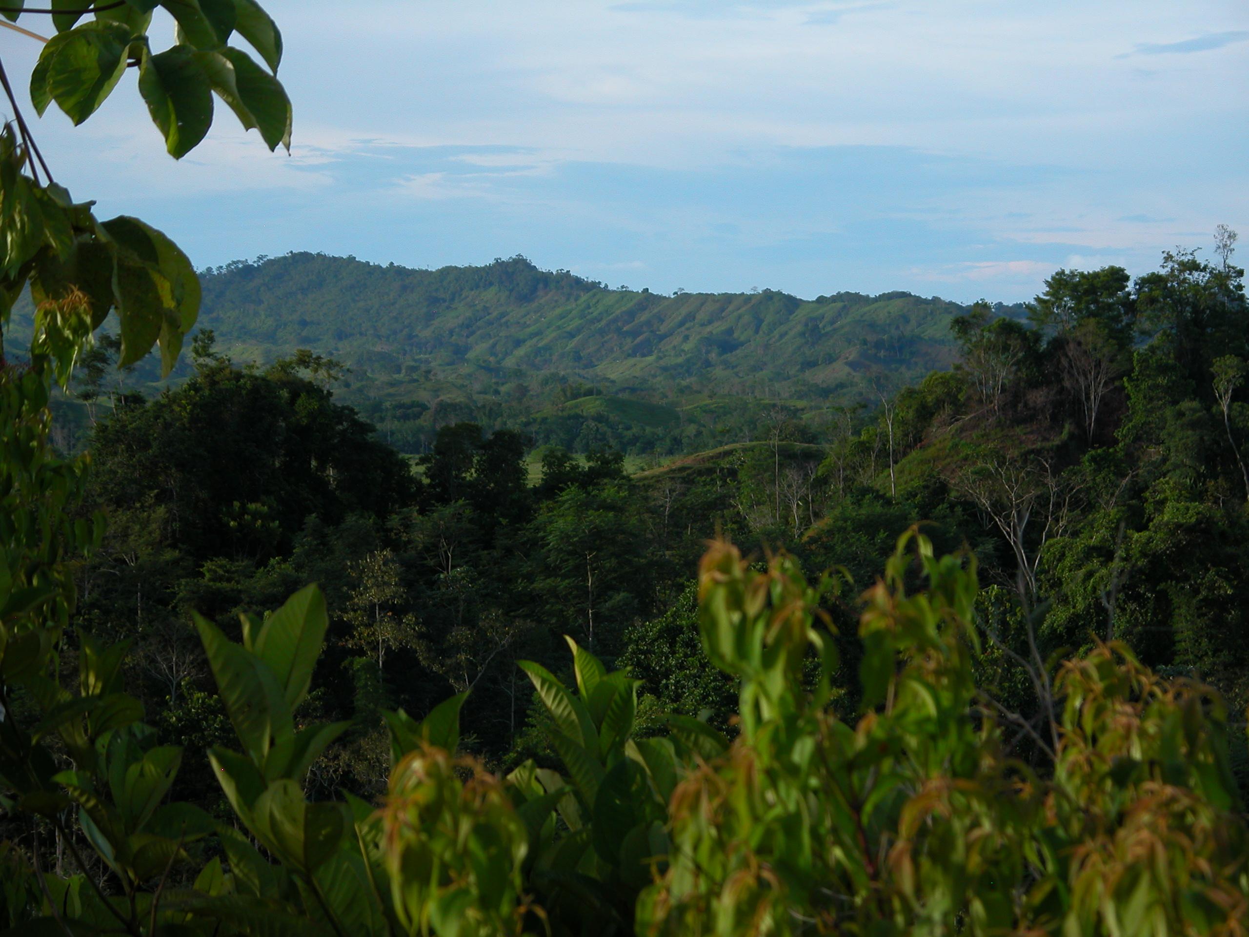 Islas de carbono