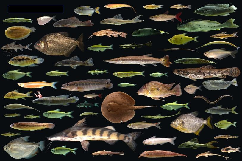 Amazon Fish, el reto de consolidar la riqueza acuática de la Amazonía