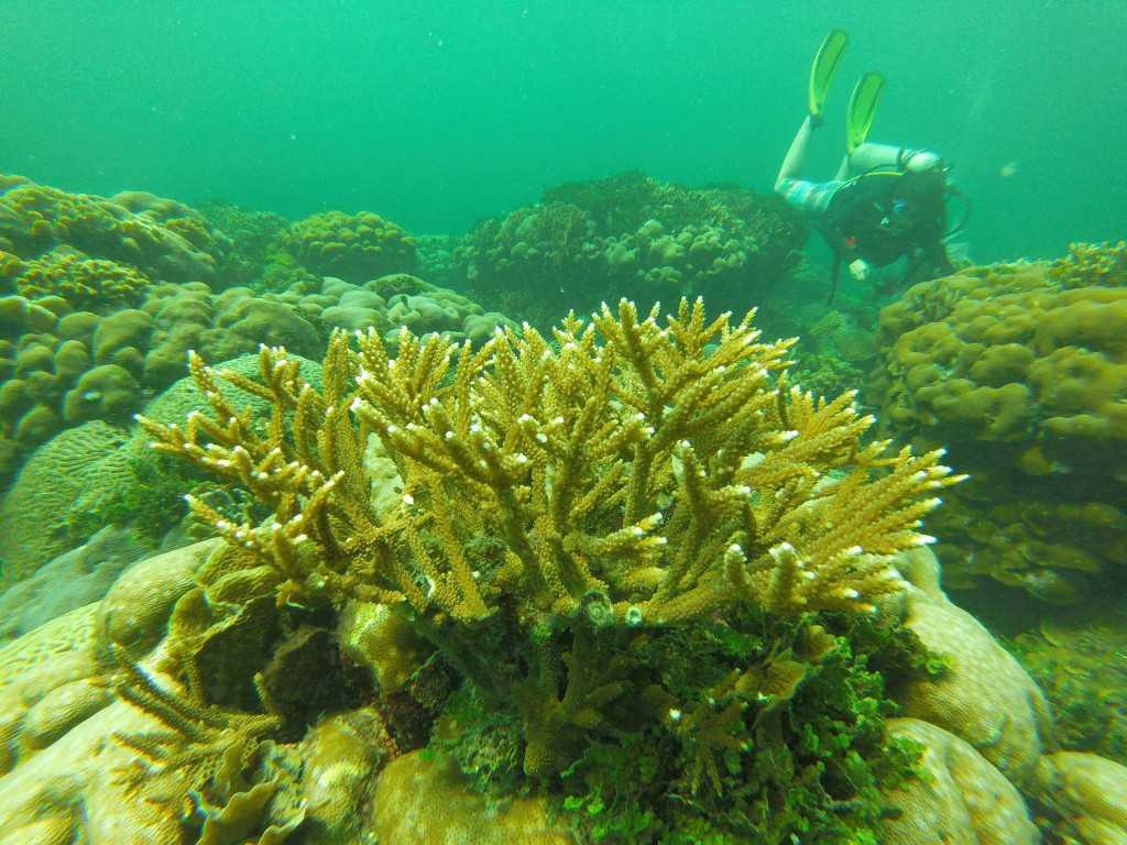 Los corales profundos de Barú, imagen tomada durante la etapa de investigación sumarina.