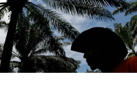 palma-sostenible