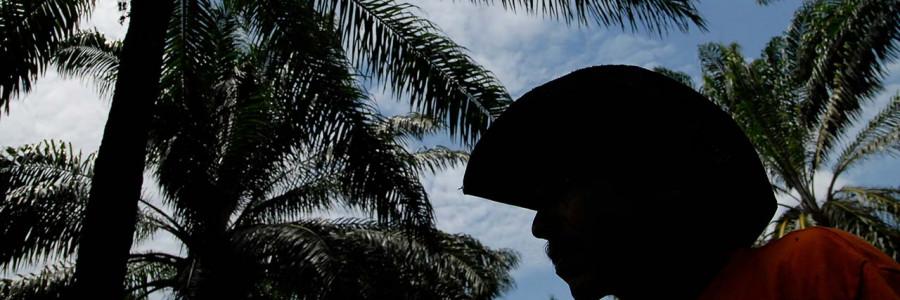 De pasturas a cultivos de palma de aceite: ¿una reconversión sostenible?