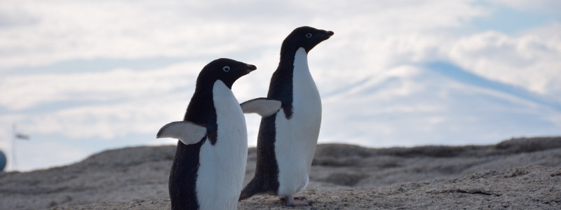 Javeriana en Antártida