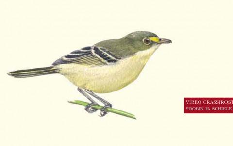ave providencia