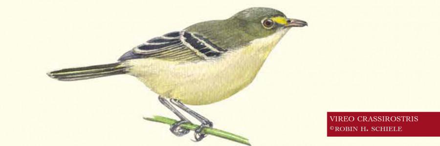 Huracán Iota pudo desaparecer ave endémica de Providencia
