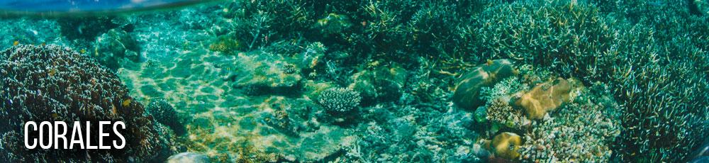 Corales en colombia