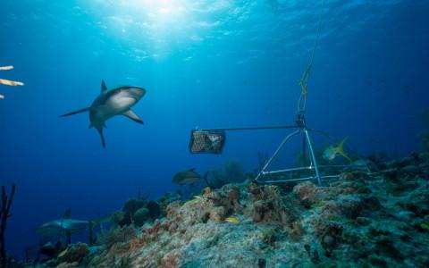 Tiburones en colombia