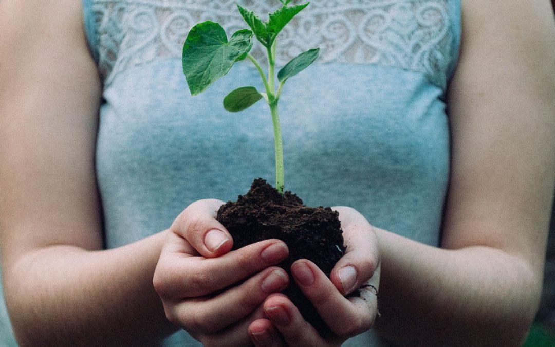 Desarrollo sostenible, consumo responsable y reciclaje ¿Cómo está la cultura ambiental en Colombia?