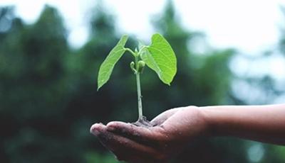 Universitarios buscarán soluciones a problemáticas ambientales